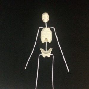 Esqueleto 2 (2)